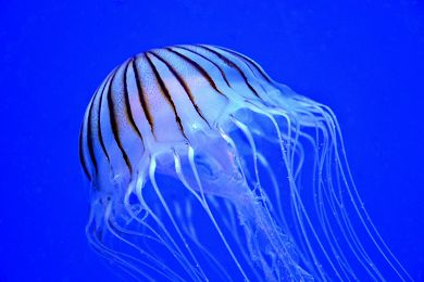 {tour-faq limit='1'}Will Stingers or Jellyfish affect my day out on the Great Barrier Reef? — Jarad Higgins{/faq-images}